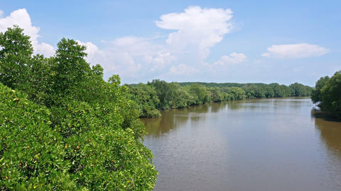 4k pan shot, high angle view of the river with mangrove forest Live Action