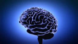 Human Brain With Neuronal Impulses. Spinning. Loopable. Blue Footage