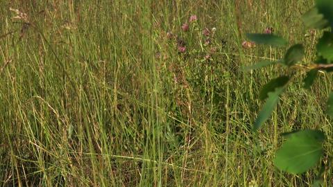 Grass Footage