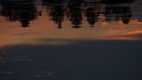 Reflection of trees in the water Stock Video Footage