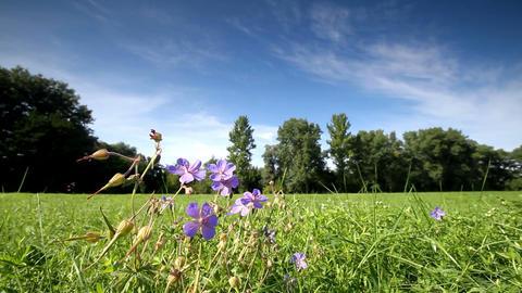 rural landscape Stock Video Footage