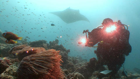 Manta rays and underwater videographer, filming the symbiosis of clown fish and Live Action