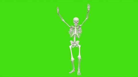 Skeleton dancing on green screen. 3D rendering フォト