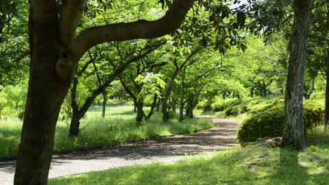 Fix:Spring park where branches of trees sway in the breeze ライブ動画