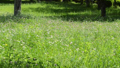 Fix:Spring park where grass sways in breeze ライブ動画