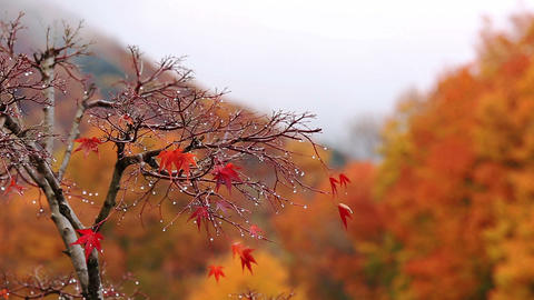Tree with mountains and autumn foliage in the background Footage