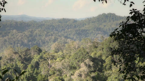 Panoramic View Of The Lush Tropical Plants Footage