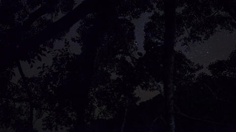 Starry Night Time Lapse Inside Wild Jungle 4K stock footage
