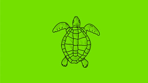 Sea Turtle Swimming Drawing 2D Animation Animation