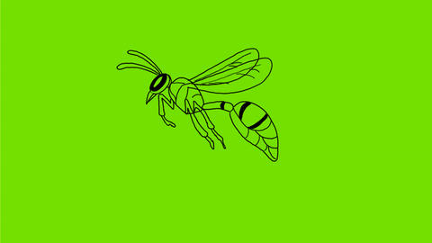 Wasp Flying Drawing 2D Animation Animation