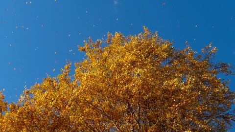 Autumn trees with yellowing leaves against the sky Archivo