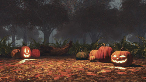 Halloween pumpkins in haunted forest at misty dusk Footage