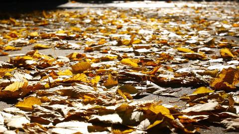 Slow Motion, Girl Walking in Autumnal Park on Orange Leaves, Scattering Kicking Footage