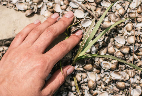 The bank of the river is covered with shells. Hand touches the texture Photo