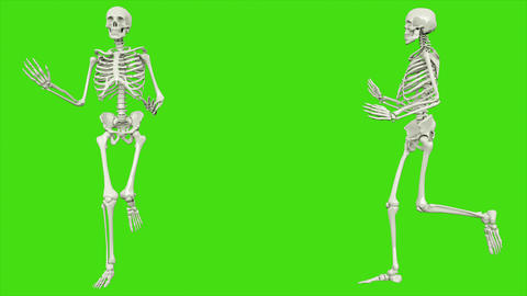 Skeleton running. Seamless loop animation on green screen Animation
