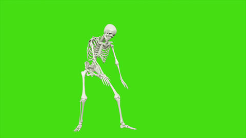 Skeleton dancing. Animation on green screen Animation