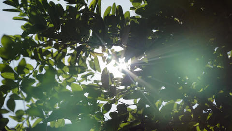 Bright Sun Shines Through Green Tree Foliage Footage