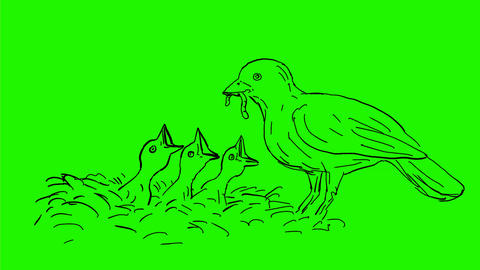 Bird Feeding Worm to Chicks Drawing 2D Animation Animation