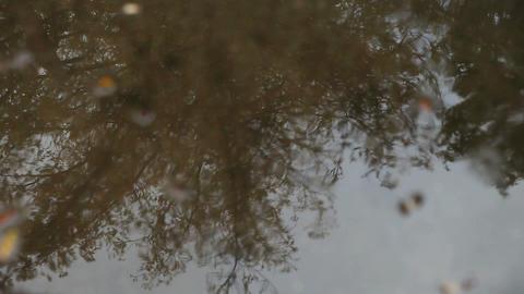 Rain puddle reflects tree Footage