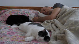Afternoon nap. Man and two cats are sleeping. Focus on a man and next on a cat Footage