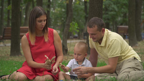 Young parents with their young son collect leaves in the park Footage