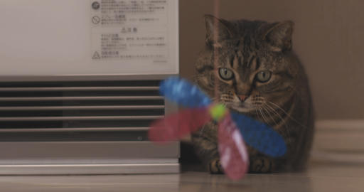 Cat plays toy close shot ライブ動画