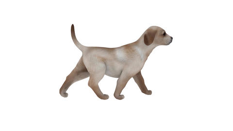 Dog animated 3D moving model rotating Full HD Animation
