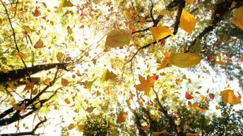 Autumn Fall Leaves From Above Falling Fast - Detailed... Stock Video Footage