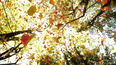 Autumn Fall Leaves From Above Falling Fast - Detailed Autumn Foliage Video Animation