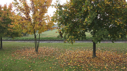 Trees in autumn. Autumn trees and leaves. Railroad in the park Footage