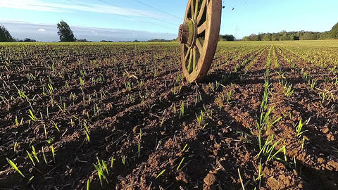 Ancient horse carriage wheel rolling on agriculture field, slow motion Live Action
