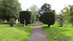 Eldery Couple Walking Between Yew Trees At St Nicholas Church Chislehurst UK stock footage