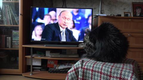 The cat looks at the Russian President Vladimir Putin on TV. 4K Footage