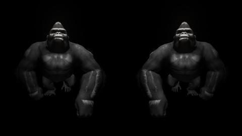 Dark Bodyguards Animal Gorilla Double Center Black Background VJ Loop Footage
