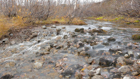 Mountain stream runs in the mountains of the Caucasus. Among green bushes Live Action