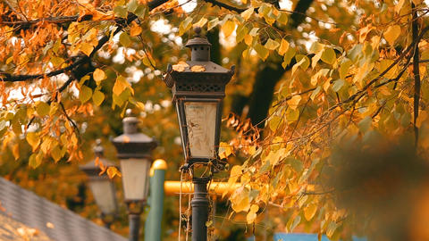 Old vintage lantern at yellow autumn park with wind-blown leaves, nature in park Footage