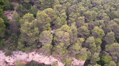 Natural Forest on a Greek Mountain Footage