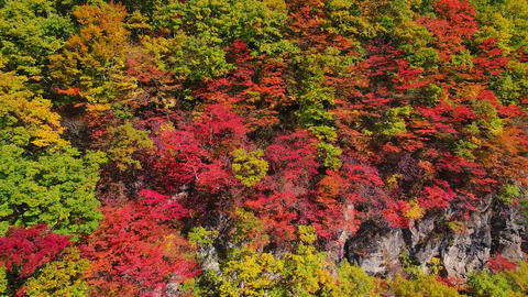 Aerial - Autumn tinted trees spreading in the valley Pan Left to Right ビデオ