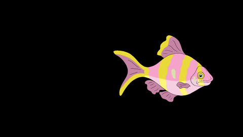 Rose-yellow striped Aquarium Fish Alpha Matte looped GIF