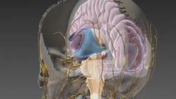 Nervous System 56 Footage