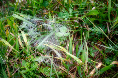 Spider net in grass with dew dropplets Photo