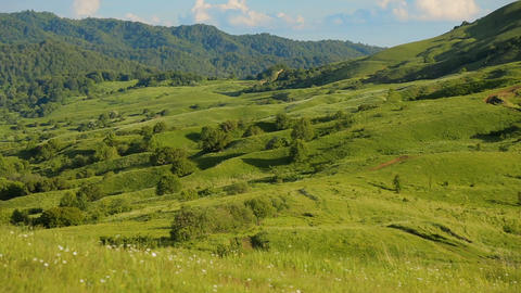 Beautiful rolling hills with lush grass and bright meadow flowers, ecology Footage