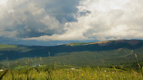 Wildflower green meadows with cloud sky above, beautiful mountain landscape Live Action