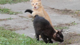 Two young kittens are playing together Footage