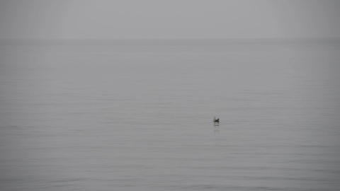 Grey ocean with herring gull Archivo