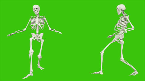 Skeleton sneaks. Seamless loop animation on green screen Animation