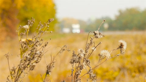 Autumn landscape. Blurred cars driving in the background ライブ動画