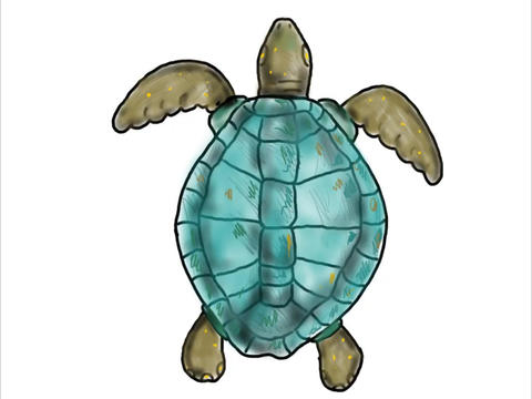 Ridley Sea Turtle Swimming Color Drawing 2D Animation Animation