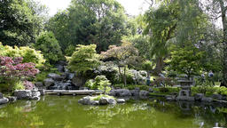 London Kyoto Japanese Garden in Holland Park, green peaceful zen Live Action