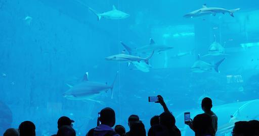 Tourism travel Aquarium in Sentosa Footage